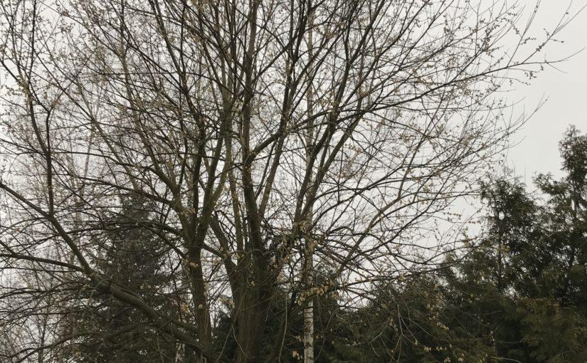 Einsatz 02/20 – Th klein – Katze auf Baum